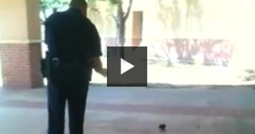 Baby Squirrel Pepper Sprayed By Police Officer