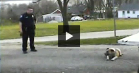 Missouri Cop Shoots Calm And Friendly Dog For No Reason