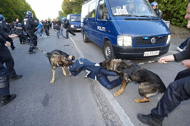 police-dog-attack-denmark.jpg