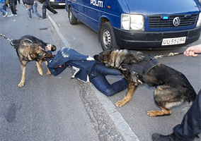 Aggressive Police Dogs Attack Soccer Fans In Denmark