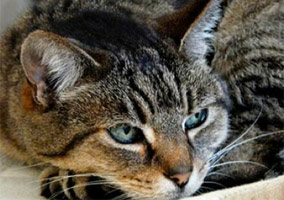 Police Kill Pet Cat, Family Lobbies For Policy Change