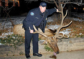 Two Boulder Officers Resign Over Elk Shooting