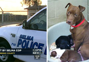 Cops Kill 5 Caged Dogs at Animal Shelter