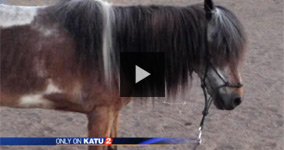 Caught In A Lie: Police Murdered Family's Beloved Pony And Claimed It Was Hit By A Car